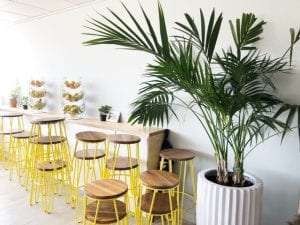 Best plants for office