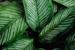 Office plants for businesses