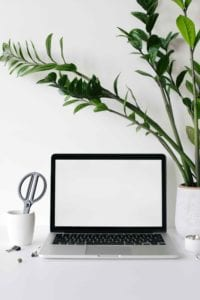 What Are The Benefits of Having Plants in the Office?